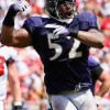 Ray Lewis Out Rest of the Season with Torn Bicep